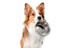 Nourriture pour chiens de moyennes races