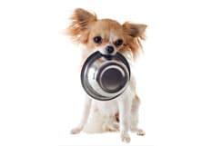 Nourriture pour chiens de petites races