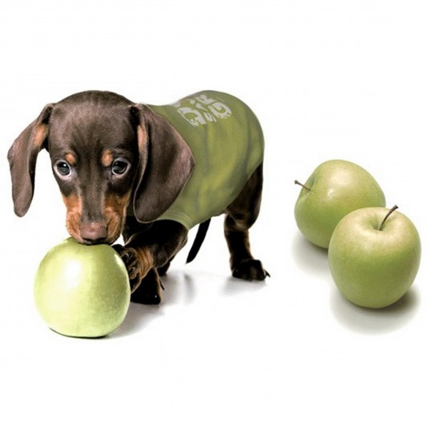 Can Dogs Have Apples