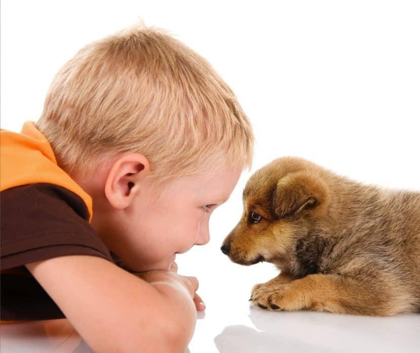 Interaction enfants-chien : signes à surveiller | Oven-Baked Tradition