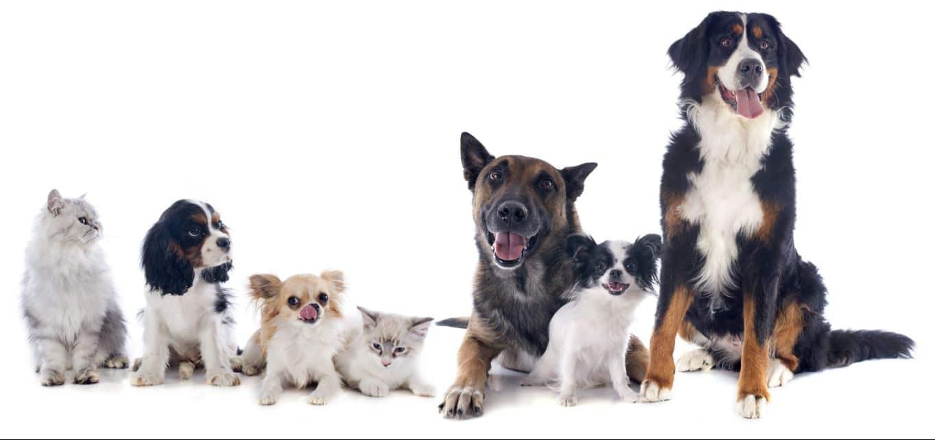 L'importance des viandes fraîches et la complicité avec la farine animale dans la nourriture de votre chien ou chat | Oven-Baked Tradition