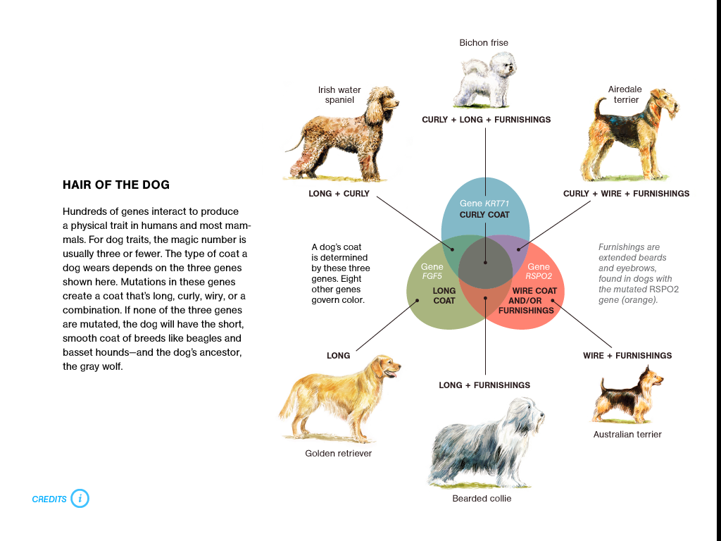 Genetics and the Shape of Dogs