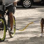 Source: Bike Tow Leash