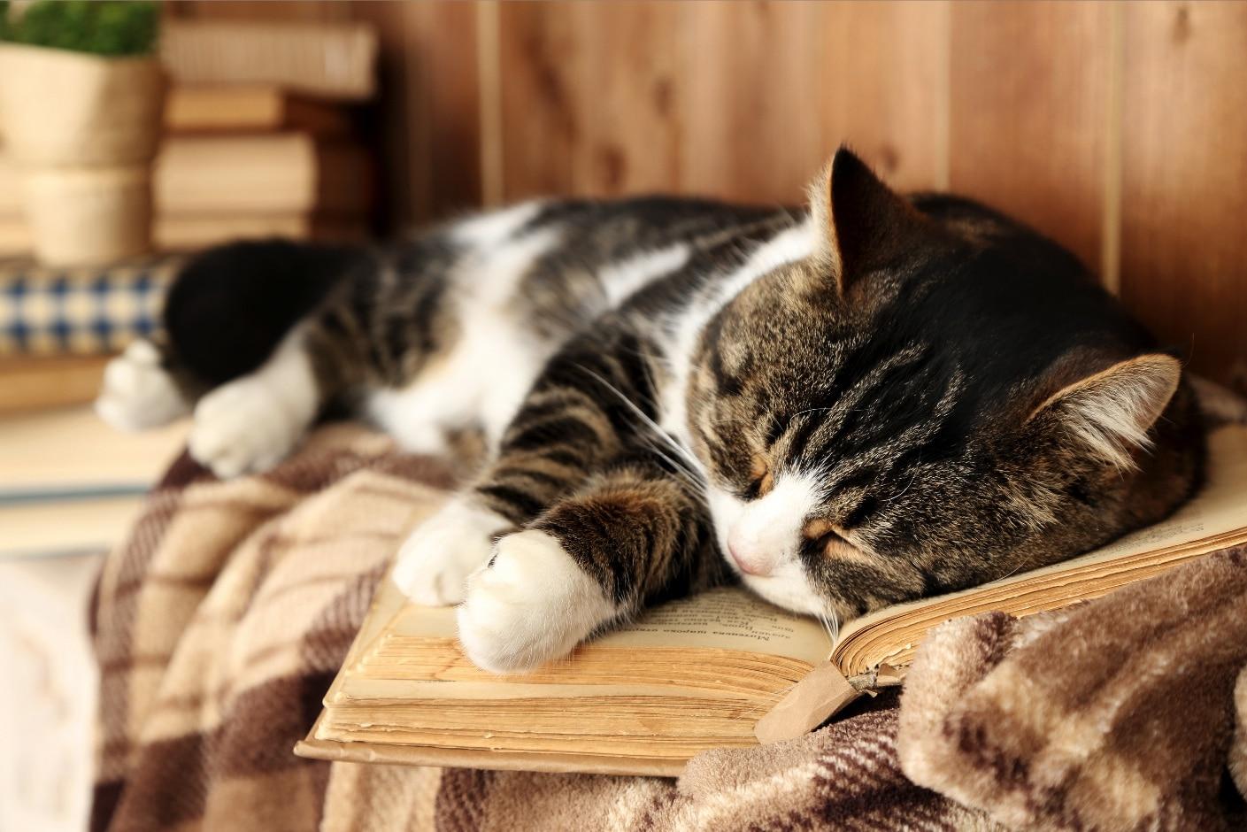 Pourquoi les chats se couchent-ils sur ce qu'on lit? | Oven-Baked Tradition