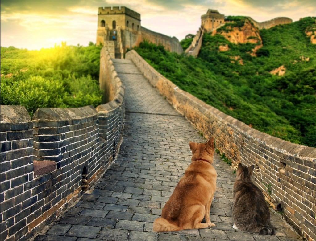 Chien et chat muraille