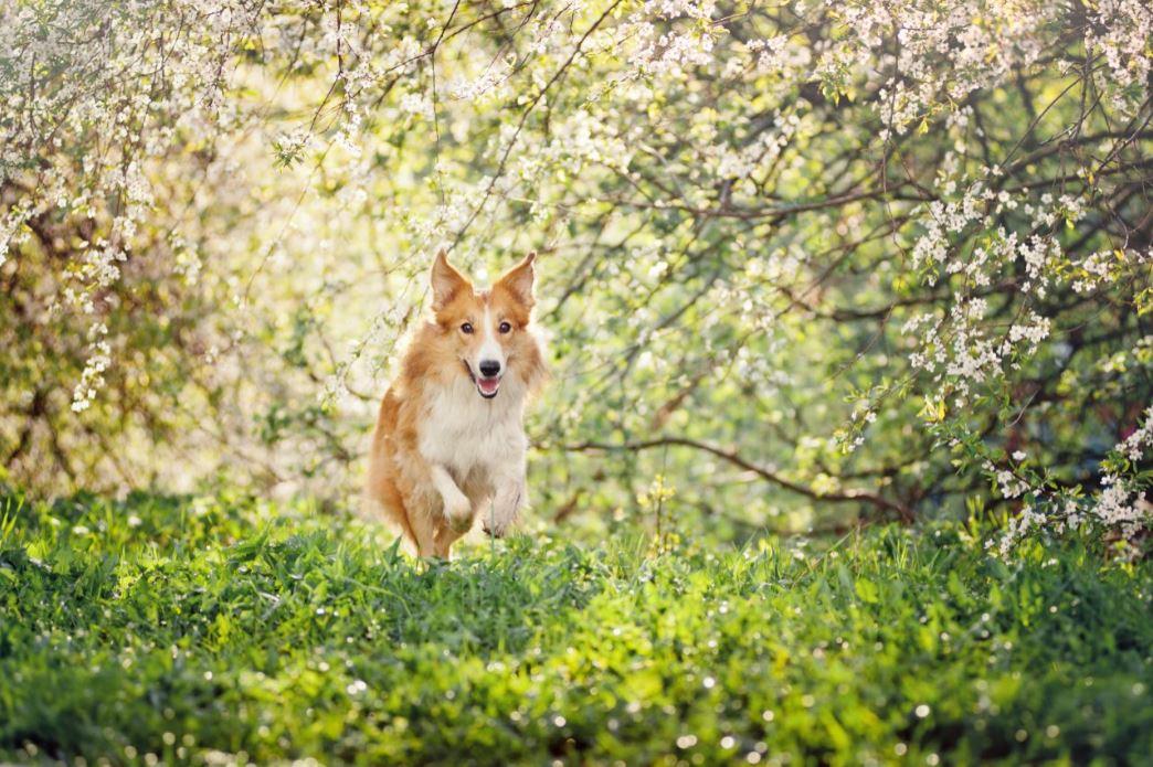 L'extrait de thé vert, bon pour la santé dentaire de votre chien! | Oven-Baked Tradition