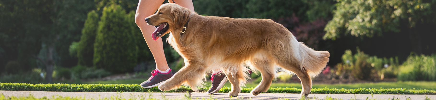 Can I Bring Dog Food Into Canada